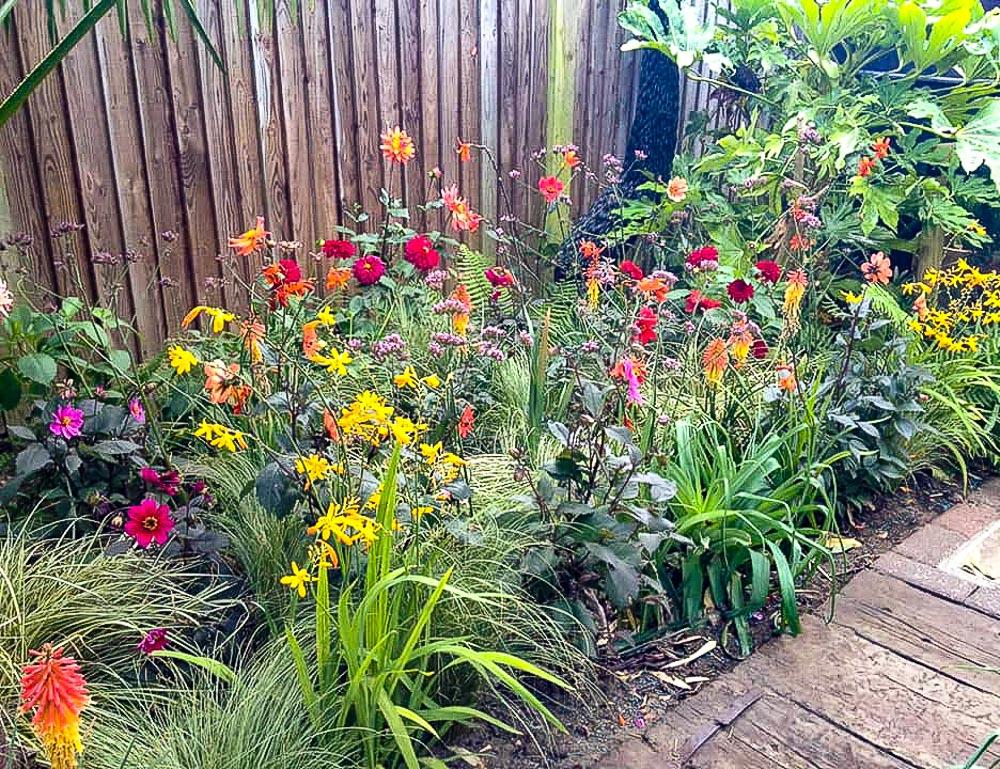 Danny-Clarke-Own-Garden-4